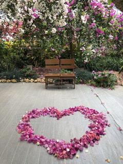 ベンチにピンクの花の写真・画像素材[1113364]