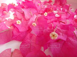 ピンク♡の写真・画像素材[1387815]