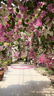 お花のトンネル♡の写真・画像素材[1387819]