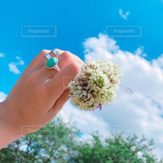 小さな花束の写真・画像素材[1133662]