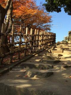 秋の草木と階段の写真・画像素材[2769324]