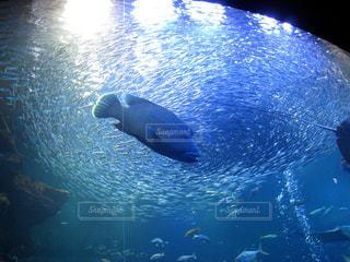 水族館,泳ぐ,休日,お出かけ