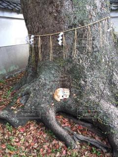 猫,マイホーム,家,木の下