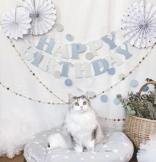 テーブルの上に座っている猫の写真・画像素材[2506291]