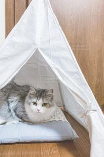 ベッドの上に座っている猫の写真・画像素材[2506299]