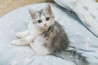 ベッドに横たわる猫の写真・画像素材[2506310]