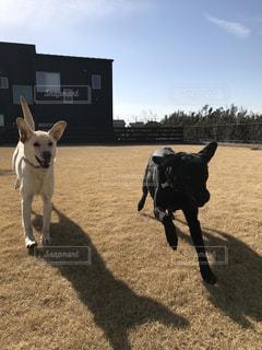 庭を走る犬達の写真・画像素材[989202]
