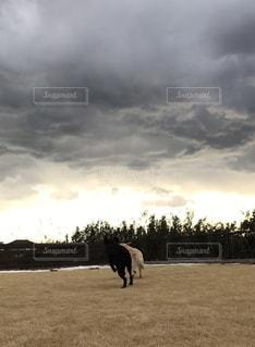 光と雲と走る犬の写真・画像素材[991072]