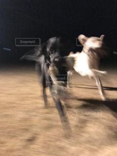 闇夜を走る犬の写真・画像素材[991075]