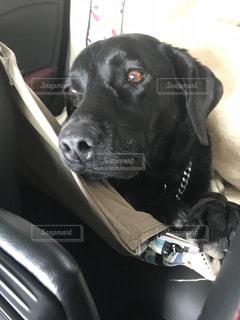 車の座席に座っている茶色と黒犬の写真・画像素材[1002999]
