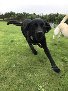 庭を走る犬の写真・画像素材[1003923]