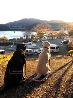 犬も黄昏れる芦ノ湖の夕焼けの写真・画像素材[1030171]