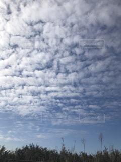 青空に映える鱗雲の写真・画像素材[1094986]