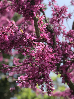 近くの植物にピンクの花のアップの写真・画像素材[1129528]