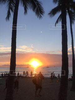 夕日,ビーチ,ヤシの木,ハワイ