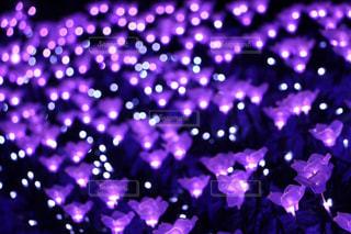 紫光の写真・画像素材[993125]