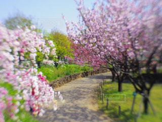 春のおとずれの写真・画像素材[1130519]