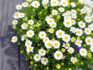 Flowerの写真・画像素材[1131128]