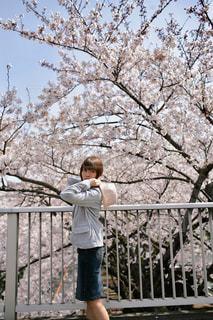 桜と女性の写真・画像素材[1131393]