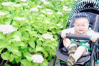 花,屋外,紫,紫陽花,赤ちゃん,flower,梅雨,6月,男の子,お散歩,ベビーカー