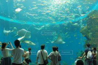 美ら海水族館の写真・画像素材[1327241]