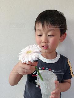 世界でひとつだけの花の写真・画像素材[1413146]