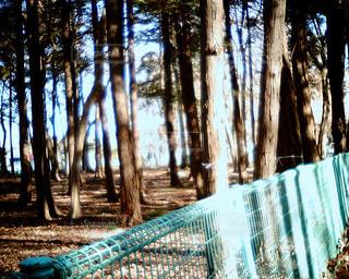 森の中の木の写真・画像素材[2956424]