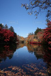 軽井沢の雲場池の写真・画像素材[1598189]
