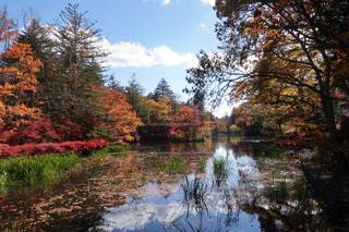 軽井沢 雲場池の紅葉の写真・画像素材[1598270]