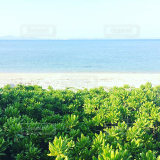 自然,海,ビーチ,砂浜,沖縄,日差し,観光,リラックス,休日,休み,休日の過ごし方