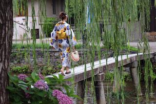 京の風景の写真・画像素材[1351851]