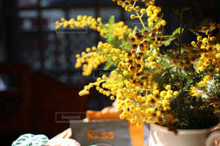 花,春,リビング,朝日,黄色,鮮やか,ミモザ,きいろ,しあわせ,多彩,春色,庭仕事,朝時間
