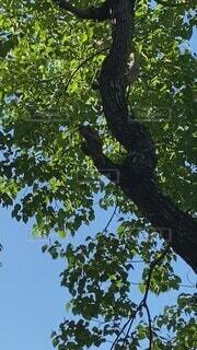 公園,田舎,嬉しい,都会,朝,生物,野鳥,さんぽ,懐かしい,キツツキ,見つけた,啄木鳥,生態,朝時間,野鳥の森