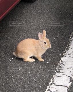 道路上の小動物の写真・画像素材[1200619]