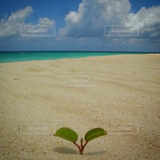 海の横にある砂浜のビーチの写真・画像素材[1020126]