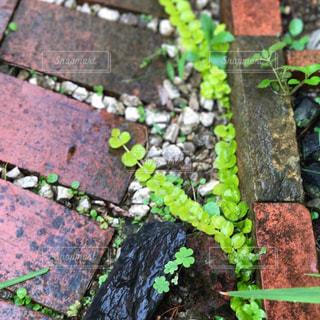 庭のグリーンの写真・画像素材[1021727]