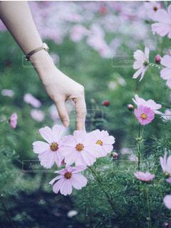 花を持つ手の写真・画像素材[2802527]