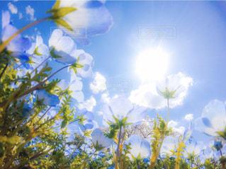 空,花,花畑,屋外,太陽,青空,青,青い空,光,樹木,眩しい,ネモフィラ,草木,広角