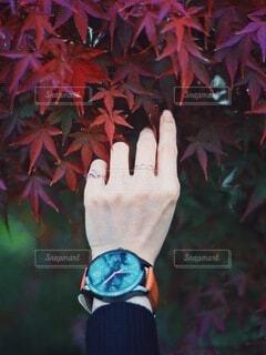 手先の秋の写真・画像素材[3836732]