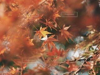 小さな秋の写真・画像素材[3843966]
