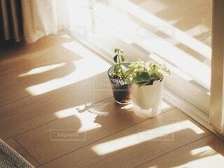 日向ぼっこの写真・画像素材[3905948]