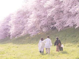 アウトドア,桜,京都,桜並木,お花見,ピクニック,休日,女子会,お出かけ,背割堤
