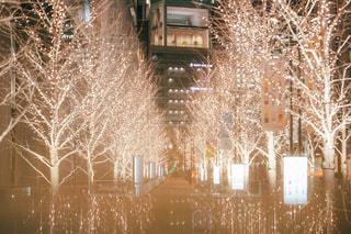 夜景,屋外,大阪,樹木,イルミネーション,ライトアップ,クリスマス,オフィス街,明るい,大阪駅,景観,シャンパンゴールド,シャンパンゴールドイルミネーション