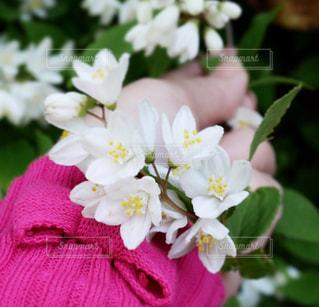 小花の写真・画像素材[1140202]
