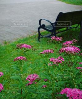 散歩道のベンチの写真・画像素材[1250378]