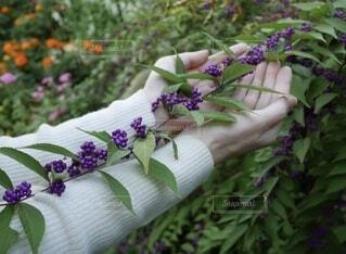 公園,花,景色,女子,ラベンダー,パープル,腕,手のひら,手持ち,美しい,人物,セーター,大人,ポートレート,植物園,ライフスタイル,紫色,草木,手元,ガーデン,両手,コムラサキ,手もと,バイオレット,袖口,ムラサキ色