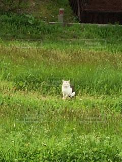 散歩中に遭遇した猫の写真・画像素材[1158460]