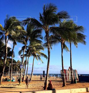 空,サーフボード,青空,樹木,ヤシの木,ハワイ