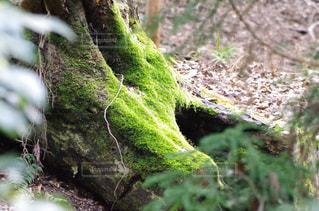 自然,アウトドア,緑,山,登山,苔,癒し