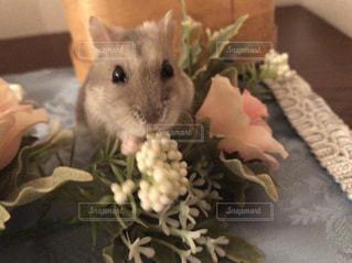 花とハムスターの写真・画像素材[991711]